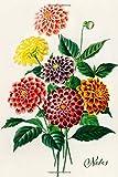 Notes: Dahlia Floral Blank Journal | Pretty Flower Bouquet Notebook | Vintage Retro Style Art