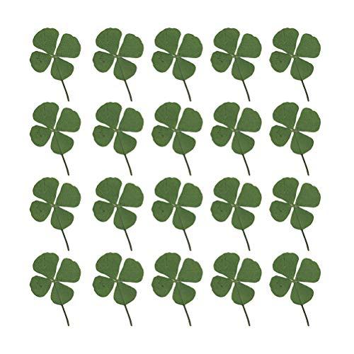 Healifty 24pcs séché trèfle à quatre feuilles naturel réel p
