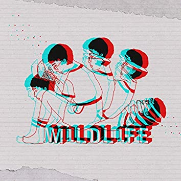 M1LDL1FE