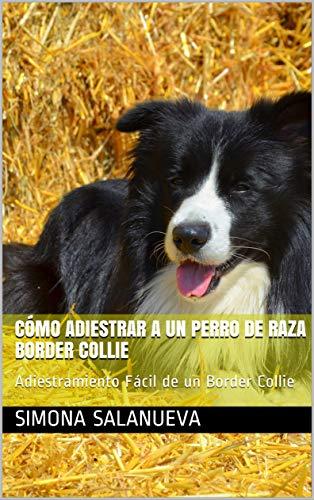 Cómo Adiestrar a Un Perro de Raza Border Collie : Adiestramiento Fácil de un Border Collie
