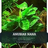 ANUBIAS NANA: CARE GUIDE THЕ BEGINNER'S AQUARIUM PLANT