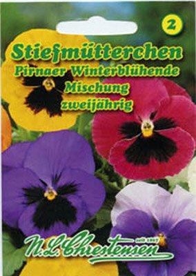 Stiefmütterchen Pirnaer Winterblühende Mischung Viola wittrockiana
