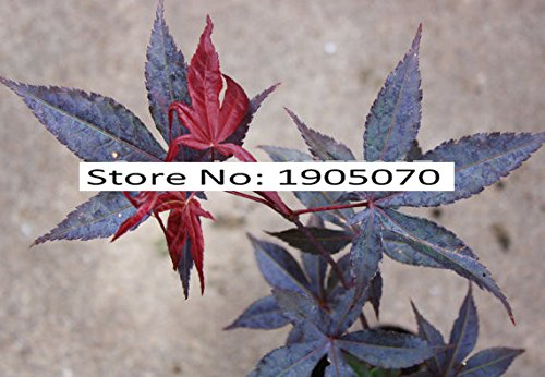 feuilles de vente chaud bricolage jardin 1000pcs / lot Kitten santé chat graines d'herbe de la pelouse Animaux fleurs vert Bonsai Decor