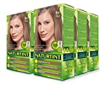 Naturtint Permanent Hair Color 8A Ash Blonde (Pack of 6), Ammonia Free, Vegan, Cruelty Free, up to 100% Gray Coverage, Long Lasting Results
