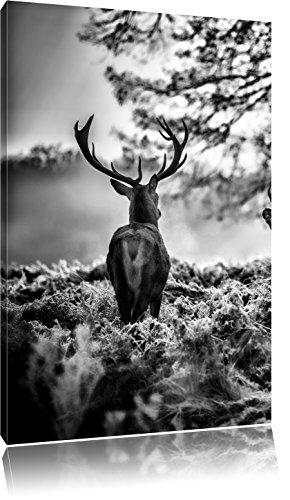 Pixxprint Hirsch Rivalen kämpfen als Leinwandbild | Größe: 120x80 | Wandbild| Kunstdruck | fertig bespannt
