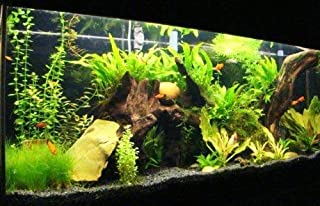 hong Wu 50 Fish Weighted Fish Tank Accessories