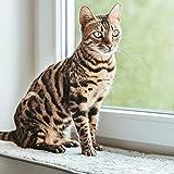 CanadianCat Company ®   Liegematte für Fensterbank   hellgrau   XXL 90 x 28 cm   Katzen   Fensterbett   Fensterkissen