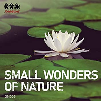 Small Wonders of Nature