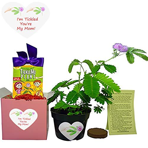 TickleMe Plant New Mothers Day Birthday Box Set
