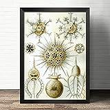 Misszhang Estilo Europeo Decorativo Estilo Vintage-Mariscos Algas Coral Animal Marino-Decoración Lienzo Pintura Póster E Impresión Sin Marco S2505 40X60Cm
