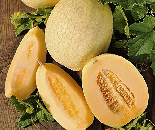 Bobby-Seeds Melonensamen Emir F1 Zuckermelone 50 Korn