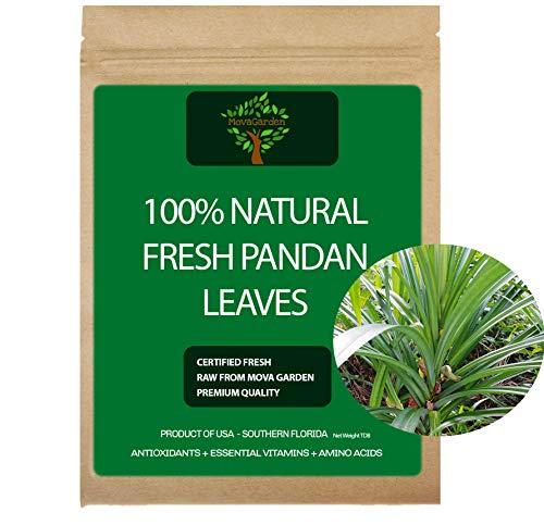 Pandan Leaves, Fresh Pandanus Amaryllifolius, Fragrant Leaves, Product of USA - 2 Leaves