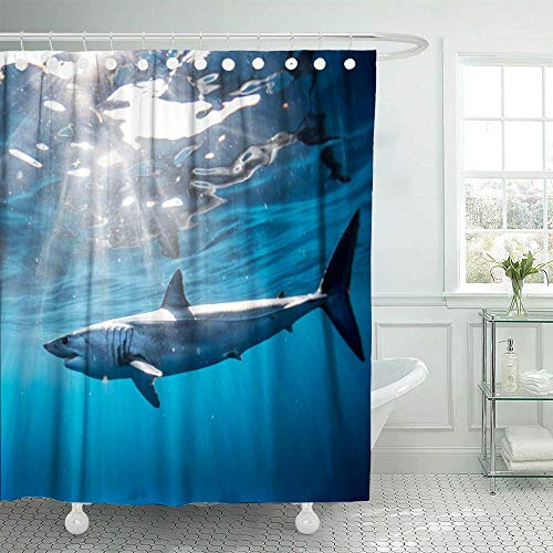 HerysTa Colorful Shower Curtain,Spa Shower Curtain Shark Diving in The Sea of with Coast Cabo San Mexico a Mako Lucas 72X78Inch Modern Shower Curtain Home Bathroom Decorations