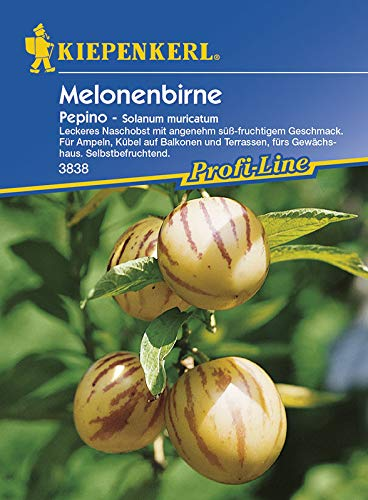 Kiepenkerl 3838 Melonenbirne Pepino (Melonenbirnesamen)