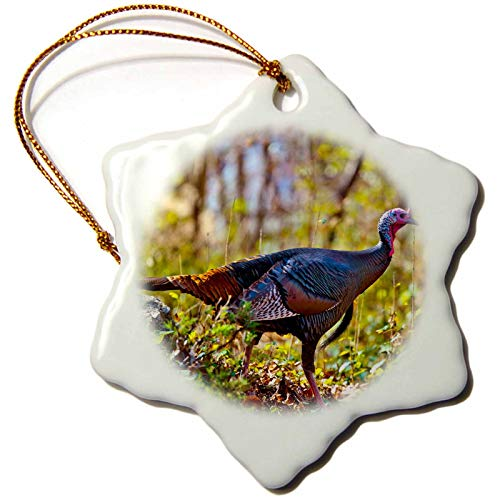 3dRose Snowflake Ornament - USA, Minnesota, Mendota Heights, Wild Turkey - 3-inches (orn_279125_1)