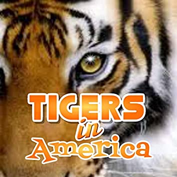 Tigers in America