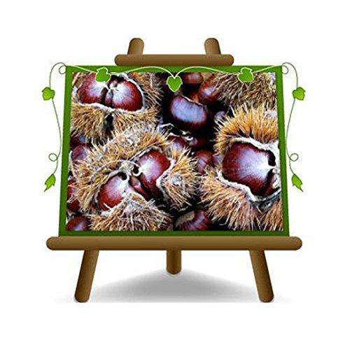 marrons euro japonais variété Bouche de Betizac Plante fruitière sur un pot de 15 - max 120 cm - 2 ans