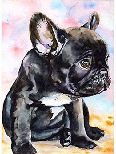 WLGQ Bulldog Francese Pittura Digitale Fai-da-Te Animale Cane Adulti Kit di Pittura per Numero Strumenti e miglioramento della casa Senza Cornice