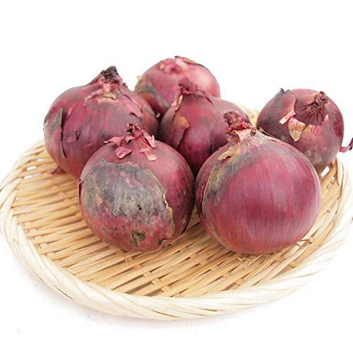 【レッドオニオン 1kg】無農薬栽培 サラダにぜひ 辛みの少ない玉ねぎ 無農薬栽培