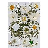 Gobesty Naturali Pressati Fiori, fiori secchi naturali Arte fai da te Decori floreali Collezione Fogliame Regalo Artigianato floreale, bianco