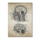 YQQICC Carteles de patente de anatomía del cerebro de cabeza humana impresión de arte de pared pinturas en lienzo cuadros para sala de estar decoración de oficina-40x60cm Sin Marco