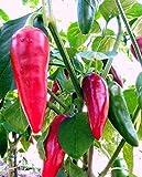 Portal Cool 25+ orgánicos de la herencia Piment d'Espelette Vasco tesoro pimienta Semillas W-107