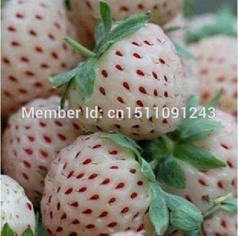 9 sur se mezclan semences de la fraise, 200 graines de fruits, plantes de balcon, la plantation de jardin, plantes en pots