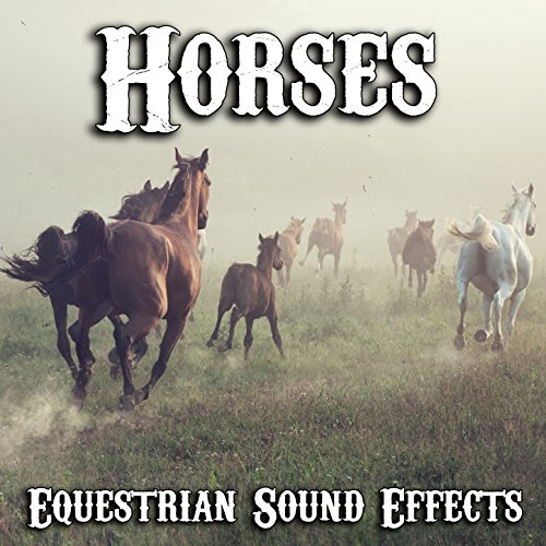 Herd of Horses Galloping