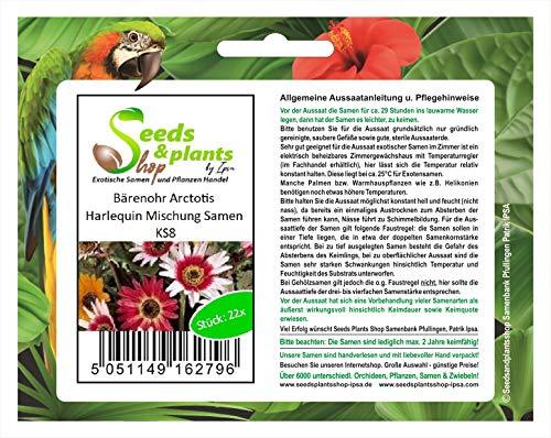 Stk - 22x Bärenohr Arctotis - Harlequin Mischung Samen Garten Blumen KS8 - Seeds Plants Shop Samenbank Pfullingen Patrik Ipsa
