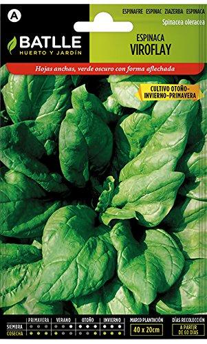 Semillas Hortícolas - Espinaca Viroflay - Batlle: Amazon.es: Jardín