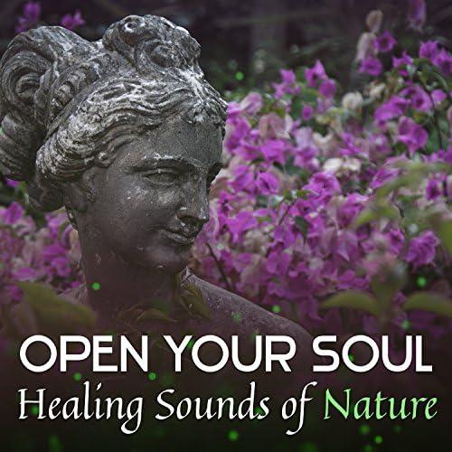 Nature Meditation Academy