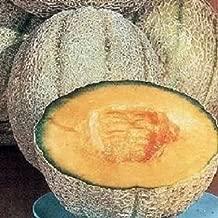 200 Cantaloupe Seeds Planters Jumbo Melon Planters Cantaloupe Seeds Mb003