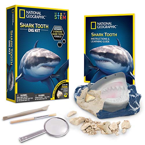 NATIONAL GEOGRAPHIC Shark Tooth Dig Kit - Excavate 3 real Shark Tooth Fossils including Sand Tiger, Otodus and Crow Shark - Great Science Gift for Marine Biology Enthusiasts of any age