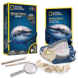 Shark Themed Gifts for Anyone Who Love The Coolest Predators in the Oceans 55