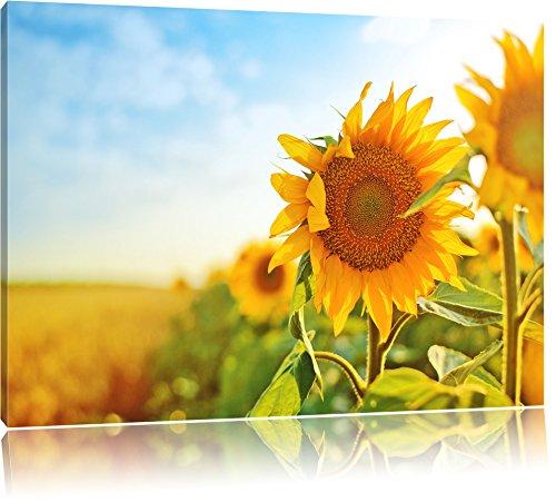Preisvergleich Produktbild Sonnenblumen Sonnenblumenfeld Sonnenblumenkerne Sonnenschein Format: 80x60 cm auf Leinwand,  XXL riesige Bilder fertig gerahmt mit Keilrahmen,  Kunstdruck auf Wandbild mit Rahmen,  günstiger als Gemälde oder Ölbild,  kein Poster oder Plakat