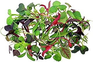 4000+ ORGANICALLY Grown Microgreens Mix This is a Mix!!! 40 Varieties Superfood Seeds Heirloom Non-GMO Delicious and Healthy, Easy to Grow! from USA