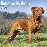 Dogue de Bordeaux - Bordeauxdoggen 2021 - 16-Monatskalender: Original Avonside-Kalender [Mehrsprachig] [Kalender] (Wall-Kalender)
