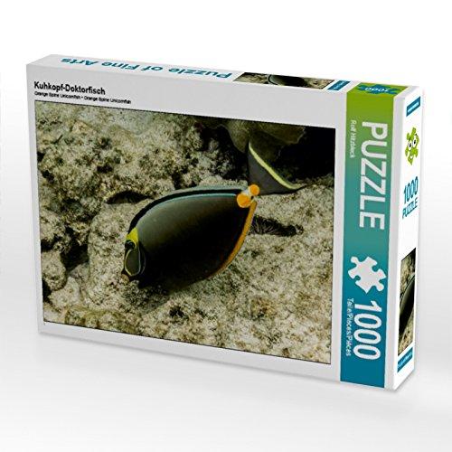 CALVENDO Puzzle Kuhkopf-Doktorfisch 1000 Teile Lege-Größe 64 x 48 cm Foto-Puzzle Bild von Rolf Hitzbleck