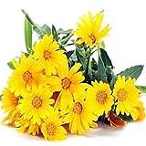 Semillas de Flores Paisaje para,Flores Semillas Planta Bonsai,Semillas de crisantemo Salvaje, Plantas en macetas de Interior de balcón-0.5KG