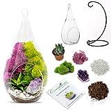 DIY Terrarium Kit for Adults with Live Succulent Plant (Fresh from Florida), Metal Stand, Hanging Glass Terrarium, Reindeer Moss, Crystal & Rocks - Handmade in USA (7' Teardrop Glass Terrarium)