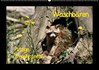 Waschbaeren (Wandkalender 2022 DIN A2 quer): Putzige Immigranten (Monatskalender, 14 Seiten )