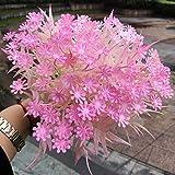 Unbekannt 5 stücke Kunststoff Traum Stern Gras Mailand Gras ölgemälde hochzeitsdekoration gefälschte Blume künstliche Pflanze Dekoration rosa