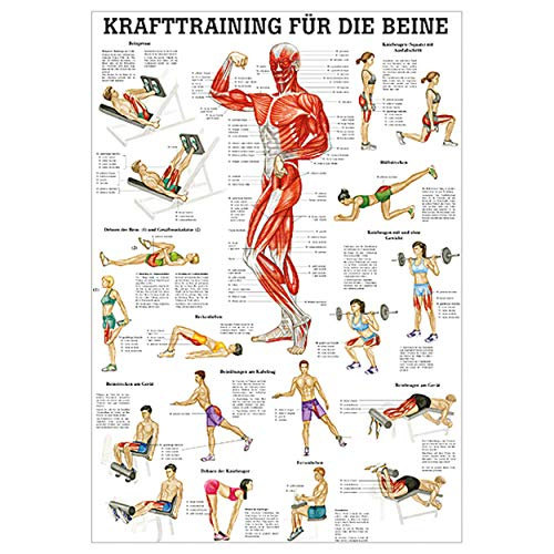 Sport-Tec Lehrtafel Krafttraining Beine, Muskelaufbau, Fitness, Bodybuilding, 100x70 cm,