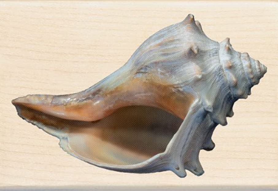 Inkadinkado Conch Shell Wood Stamp
