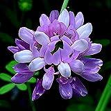 Eastbride Semillas de Plantas Verdes,Semillas de Flores de jardín de Paisaje-Color Mezclado_300PCS,Ornamentales Semillas
