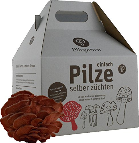 Pilzzucht-Set Rosenseitling