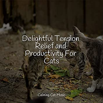 Delightful Tension Relief and Productivity For Cats