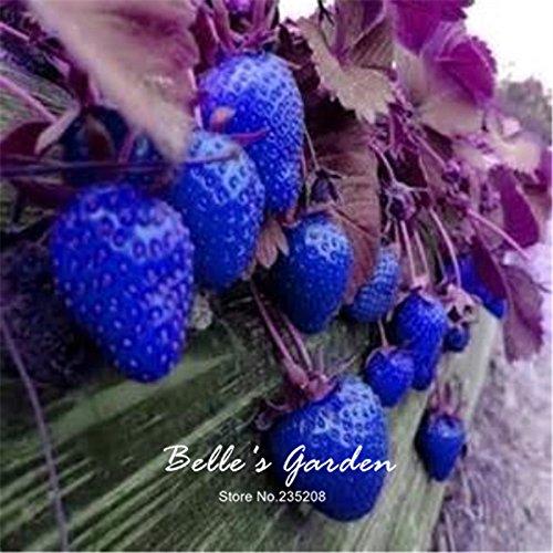 100pcs 9 variétés Choix Strawberry Graines Fraise Fruit Graines pot Bonsai Balcon Patio Jardin Plante Bricolage Bleu