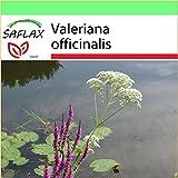 SAFLAX - Garden to Go - Valeriana - 200 semillas - Con...