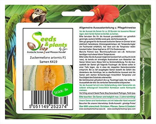 Stk - 8x Zuckermelone artemis F1 - Melone Samen Frucht Obst Pflanze Garten K419 - Seeds Plants Shop Samenbank Pfullingen Patrik Ipsa